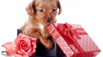 Un chien en cadeau...est-ce une bonne idée?
