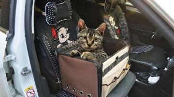 Transport en voiture avec chaton: Trucs et Astuces!