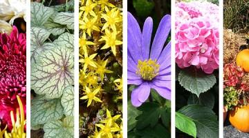 8 suggestions pour raviver vos arrangements floraux cet automne